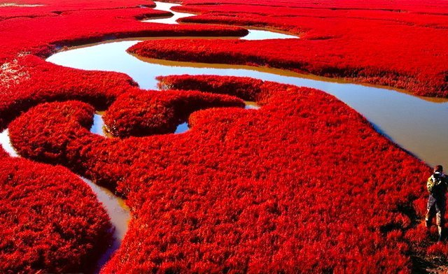 Red Beach China,