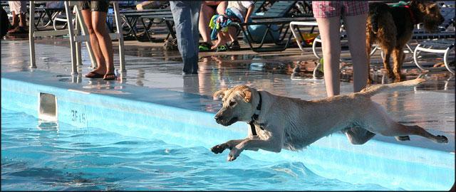 Piscinas para perros en espa a felices vacaciones for Piscinas diferentes en madrid