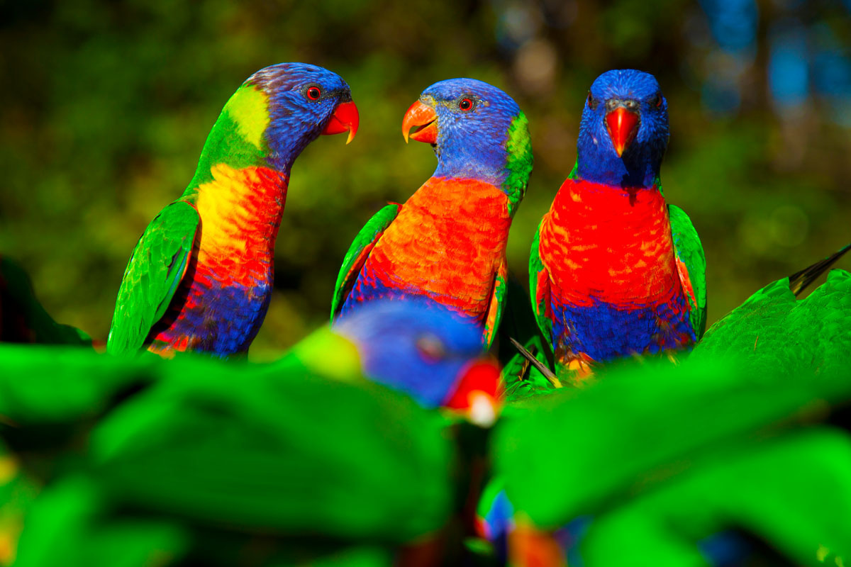 El Motivo Para Viajar A Australia  Animales