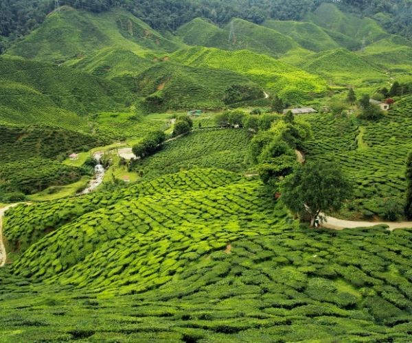 Darjeeling, Bengala Occidental