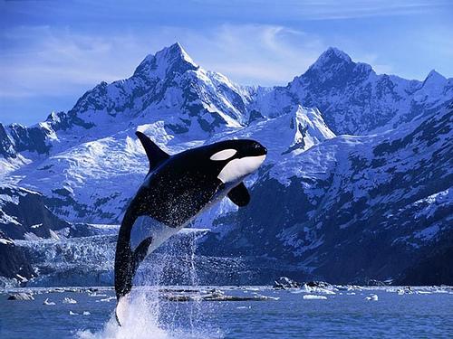 Canada y avistamiento de ballenas