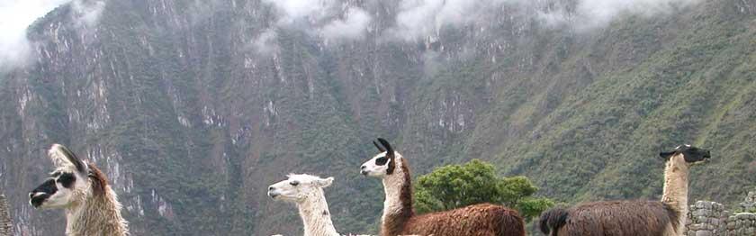 Especial Trekking: Camino Inca a Machu Picchu