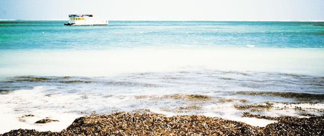 Playa Bavaro Todo Incluido