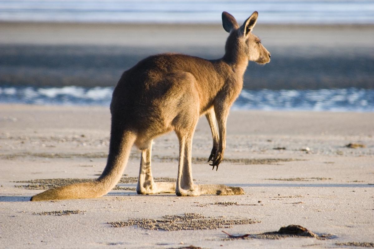 Circuito Australia