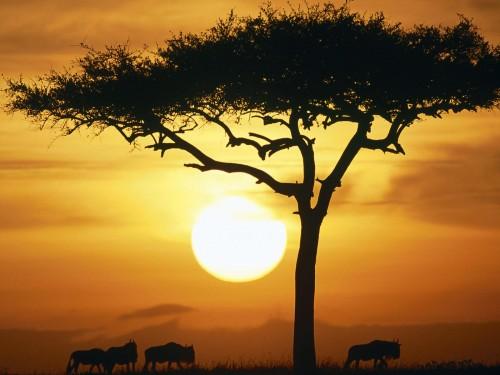 Luna de miel Safari en Kenia