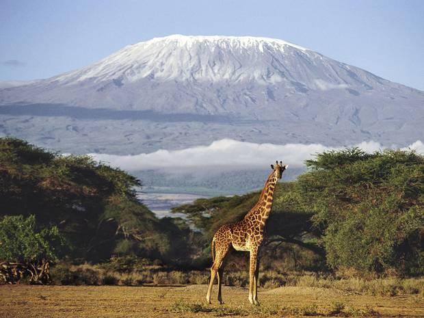 Safari a Tanzania