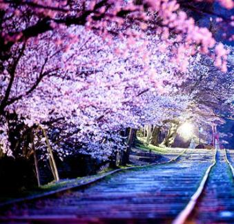 Luna Miel en Japón