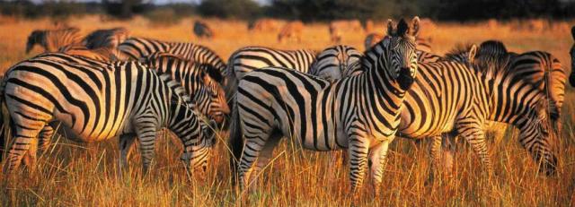 Safari por Africa parque kruger