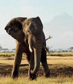 Ofertas en Viajes con Safaris