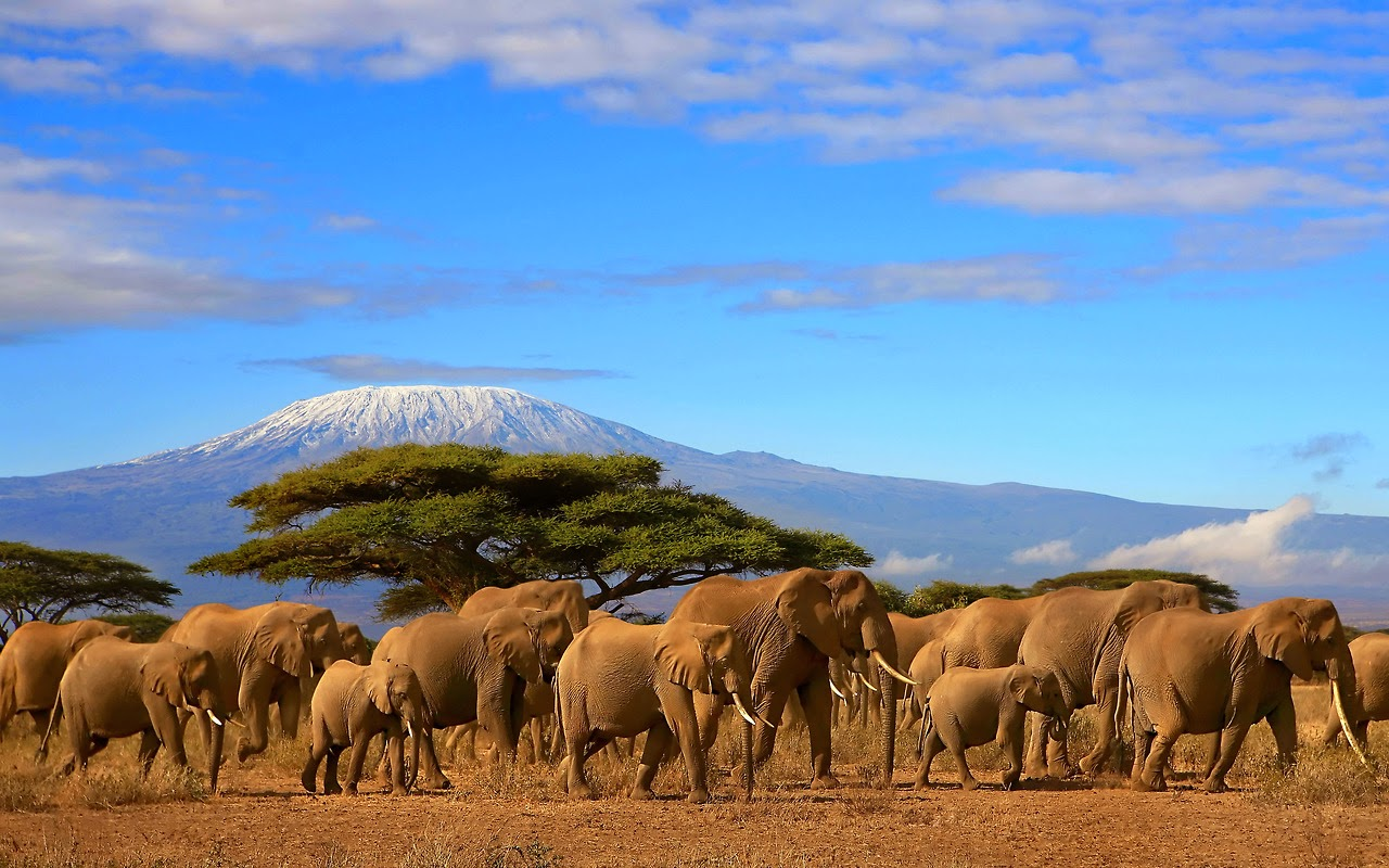Safari Tanzania Zanzibar