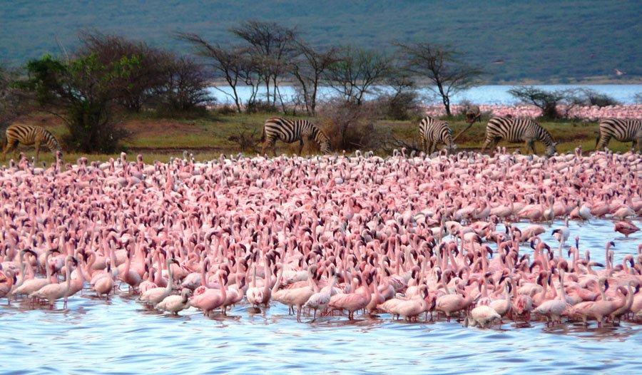 Safari Kenia Zanzíbar