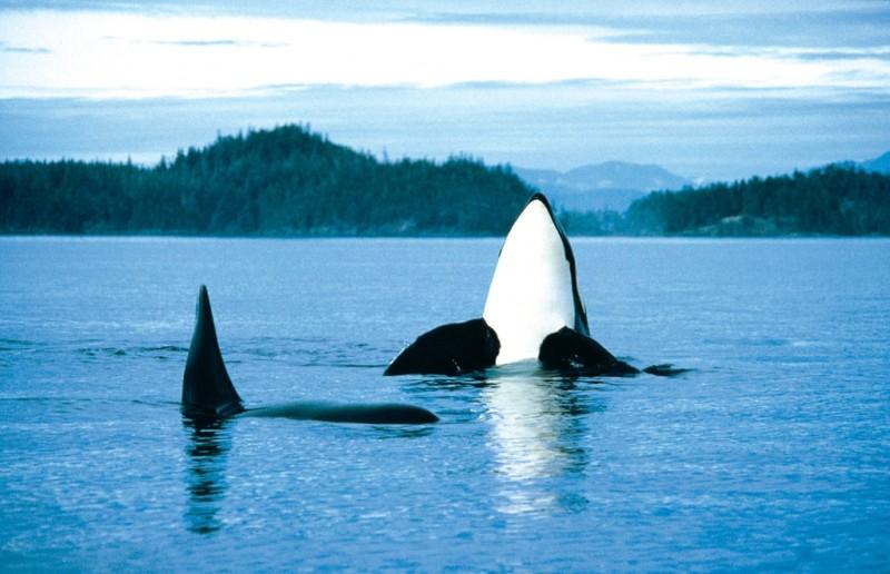 Viaje a Canada y avistamiento de ballenas