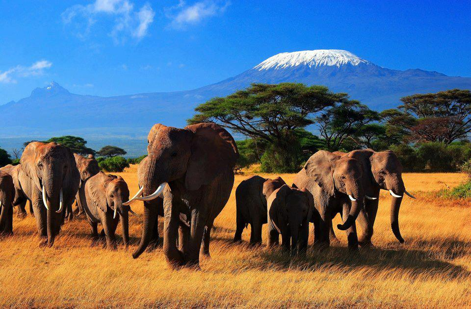 Safari barato por Africa