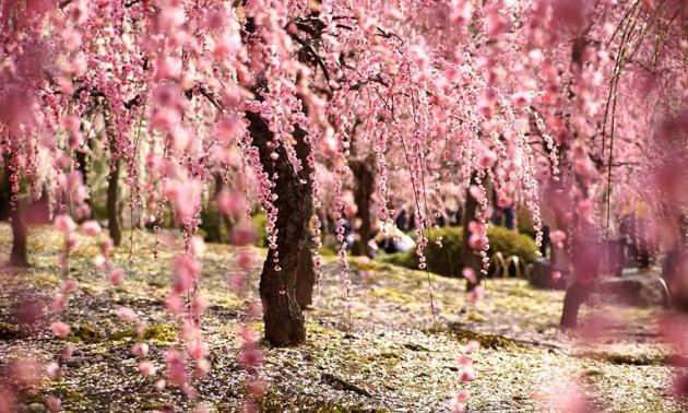 Luna de miel a Japon