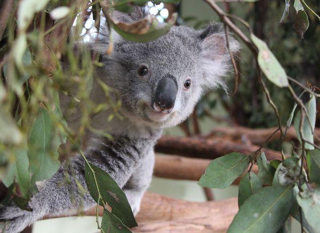 Australia viaje de novios