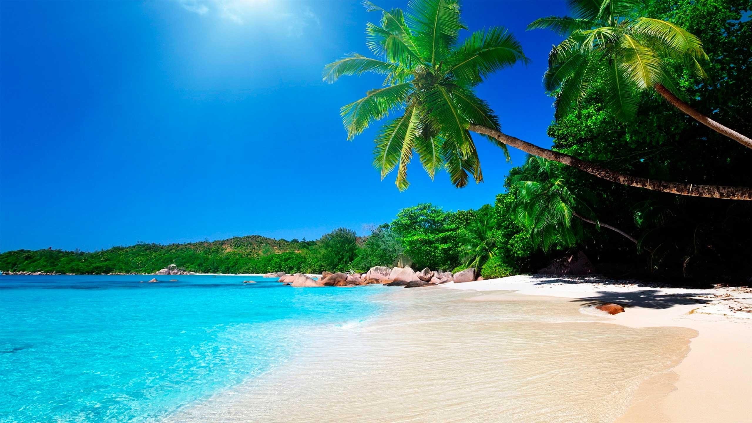 Isla del Caño buceo