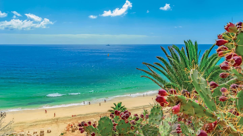 Fin de Año Fuerteventura Todo Incluido